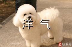洋气招财的宠物名字 寓意招财的宠物名字